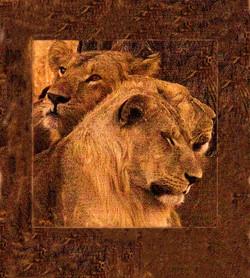 The Lions Sleep Tonight Tanzania