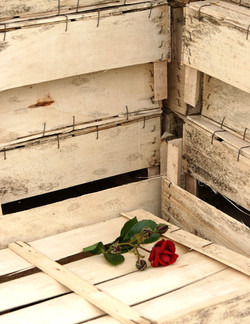 A Rose Is A Rose Lipari III
