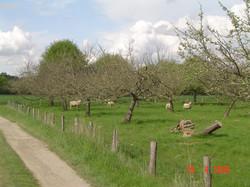 Chemin de La Tremblaye