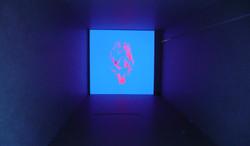fluorescente-2_7845504520_o