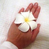 Hawaiian forgiveness process and prayer