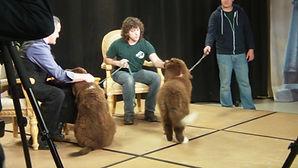 Kids show dogs.JPG