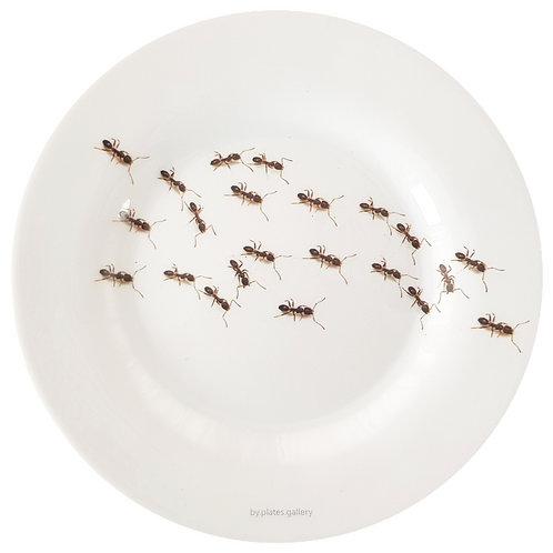 Ants I