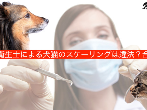 歯科衛生士による犬猫のスケーリングは違法?合法?