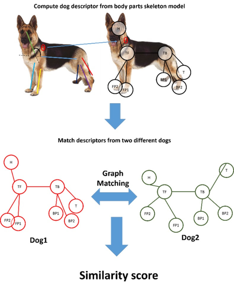 Dog skeleton computed by B.A.R.K. using algorithms