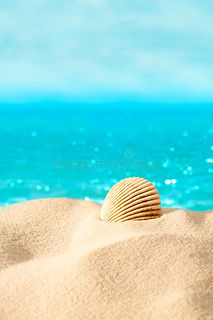 summer-beach-shell-beach-30046286.jpg