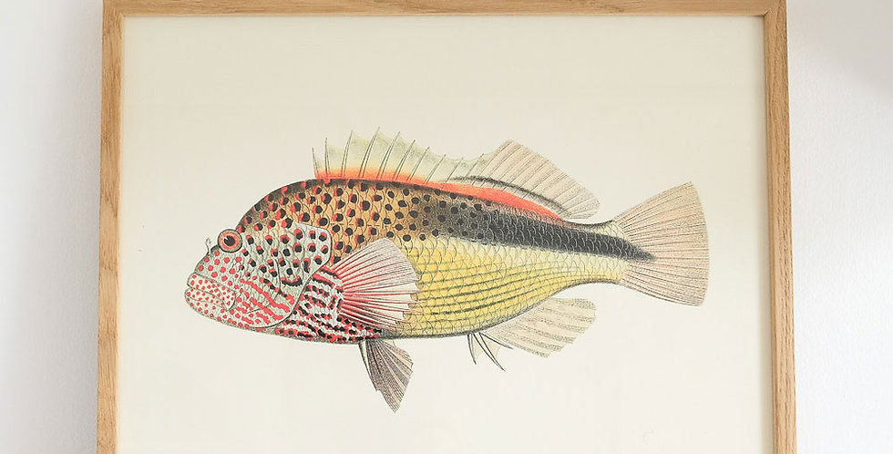 The Dybdahl Fish Print Red Dots