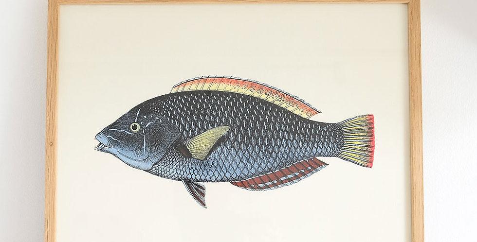 The Dybdahl Fish Print Blue