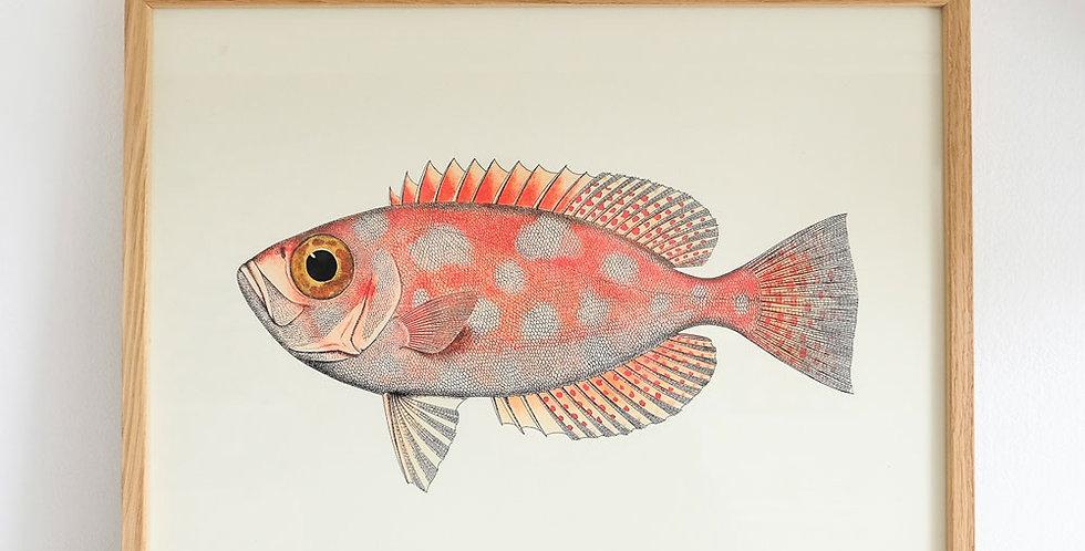 The Dybdahl Fish Print Coral
