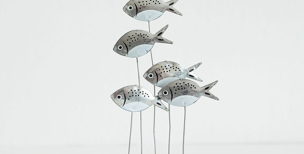Silver Bream on Driftwood