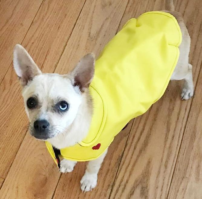 Lola Raincoat
