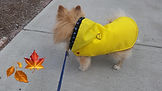 rain coat in fall