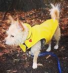 rain coat 2