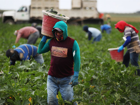 'A death sentence': Activists call on Florida governor to prioritize vaccines for farmworkers