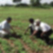 現地の方にゴマの栽培方法をレクチャーしている風景です。スリランカの豊かな自然で日