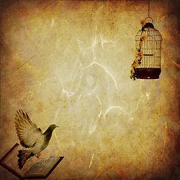 Livro ou gaiola - escolha para onde voar