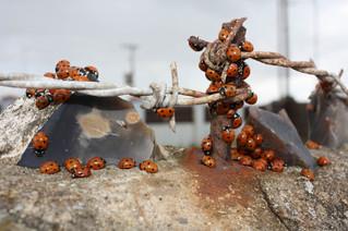 ladybird carnival 1.jpg