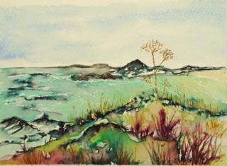 St Ives, seedpods re-sized.jpg