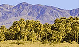 coachella-valley-borrego-health.jpg