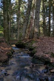 Belle randonnée en sous bois
