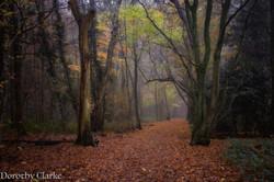 West Kingsdown Woods