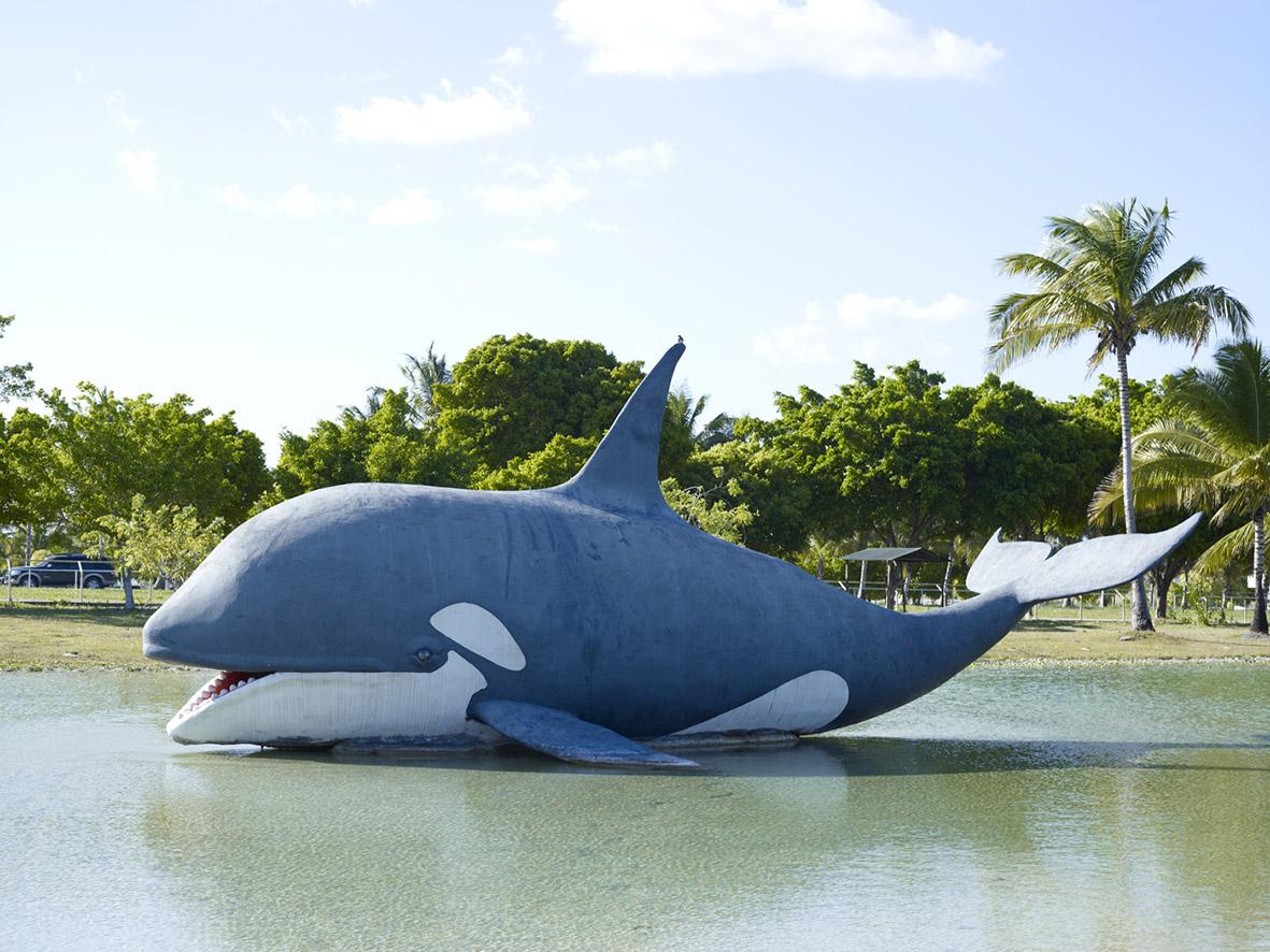 5. Orca