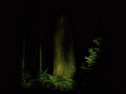5.bosque