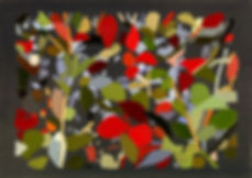 24-Hedge+2+-5.jpg