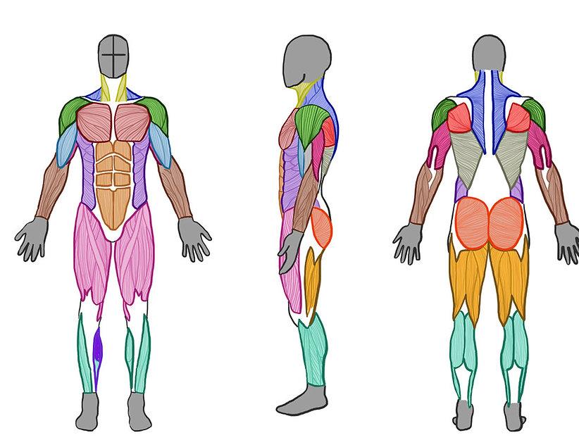 Injury map.jpg