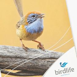BirdLife Australia