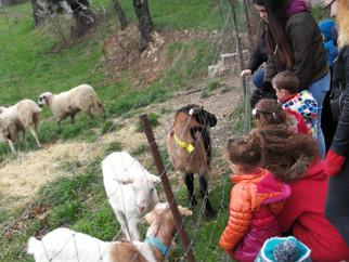 Visite des TPS  à la ferme de Vaxergues à St Gabriel