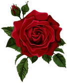 Roses-red-rose-with-bud-transparent-clip-art-picture.png