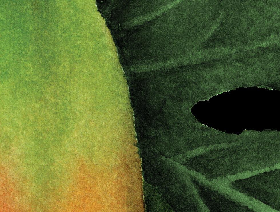 Papaya png.png