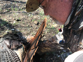 TURKEY HUNTERS ASK: DID YOU HEAR THAT GOBBLE?