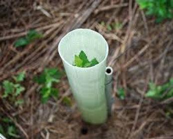 tree tubes.jpg