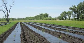 multiple uses of weed control methods such as fabric an tillage use