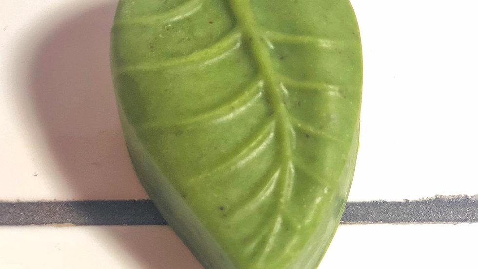 Ivy Soap