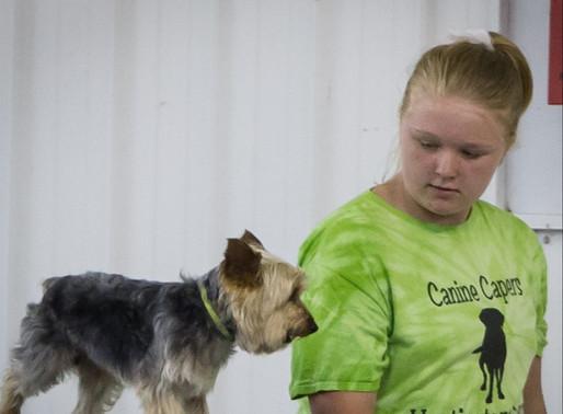 2019 Huntington Co 4-H Fair Dog Show