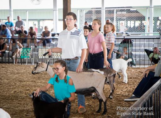2019 Huntington Co 4-H Fair Goat Showmanship