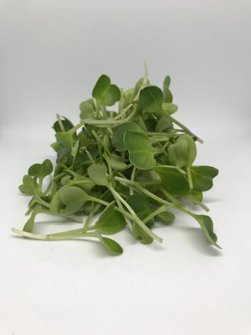 Microgreens Mustard