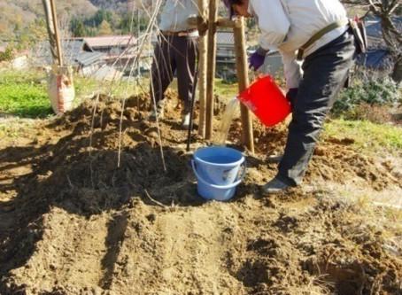 「桜の会」寄贈 桜木植樹
