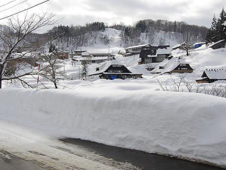 たにしの楽校は雪の中でも元気です