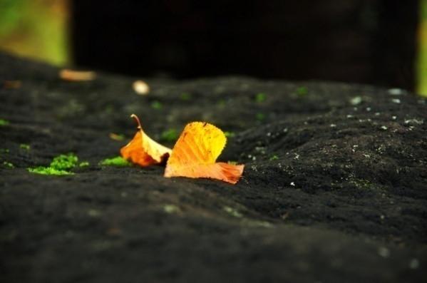 一人静かに(平成27年10月26日)