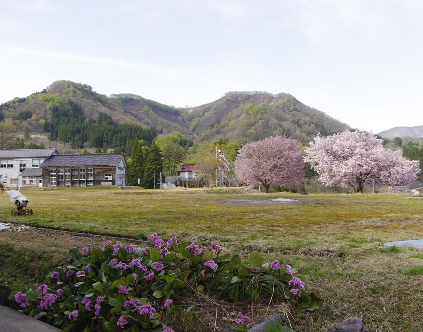 校庭から始まる桜景観