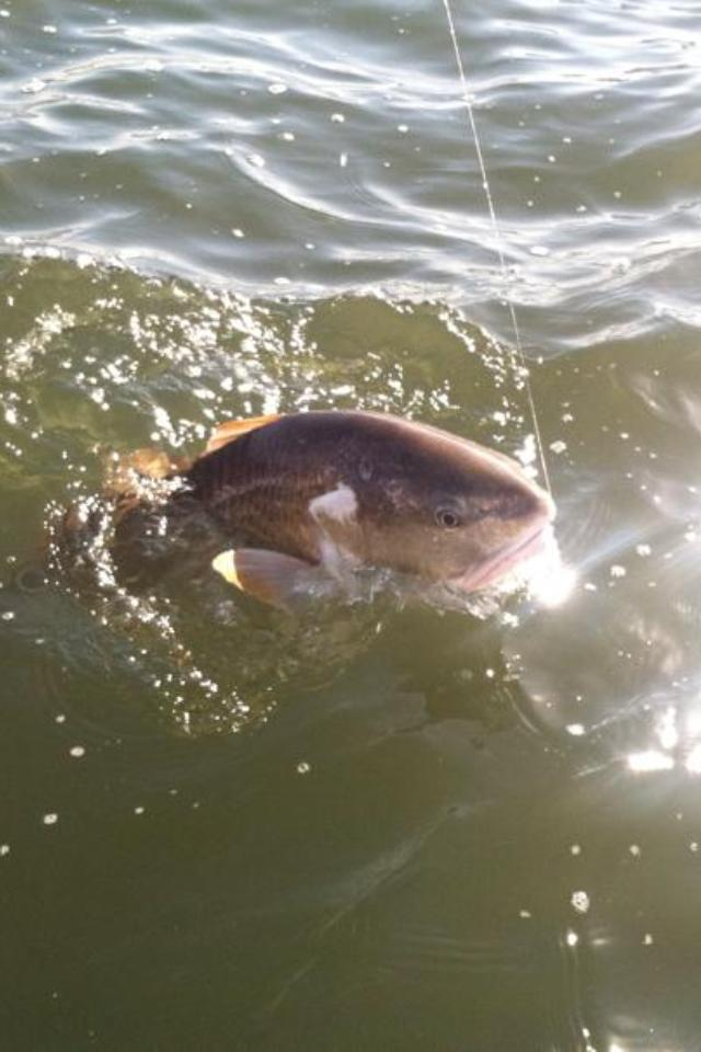 redfish guide service mississippi