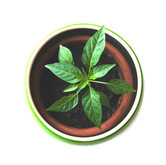 Plants & Saplings
