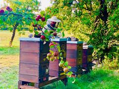B Bienen.jpg