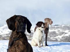 Hunde Schnee.jpg