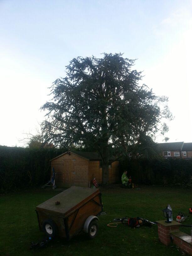 Cedar finnished