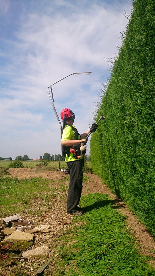Trimming a well maintained hedge